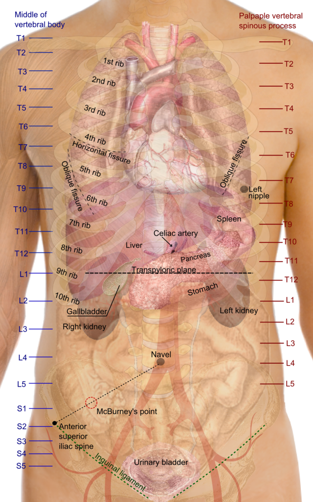 human liver location female - klejonka, Sphenoid